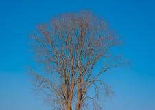 Δέντρο που βάφεται με το μπλε ουρανό Στοκ εικόνα με δικαίωμα ελεύθερης χρήσης