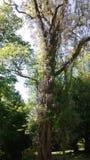 Δέντρο που εισβάλλεται με τα λουλούδια Στοκ Εικόνα