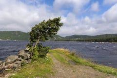 Δέντρο που κάμπτεται από τον αέρα Στοκ Φωτογραφία