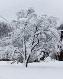 Δέντρο που καλύπτεται στη ισχυρή χιονόπτωση Στοκ φωτογραφία με δικαίωμα ελεύθερης χρήσης