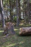 Δέντρο που κόβεται στο δάσος στοκ φωτογραφίες με δικαίωμα ελεύθερης χρήσης