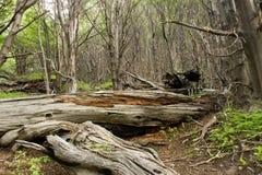 δέντρο που πέφτεται Στοκ φωτογραφίες με δικαίωμα ελεύθερης χρήσης