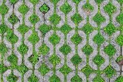 Δέντρο που παρεμβάλλεται μεταξύ του τούβλου, ξύλινες ρίζες που παρεμβάλλονται στο έδαφος Στοκ Εικόνες