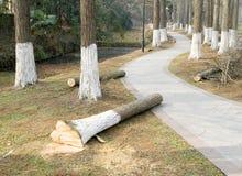 Δέντρο που περικόβεται στο δάσος Στοκ Εικόνες