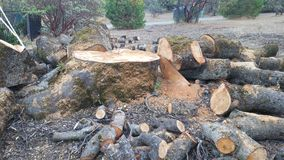 Δέντρο που περιορίζει δρύινο στοκ φωτογραφία