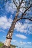 Δέντρο που στέκεται απολύτως Στοκ εικόνα με δικαίωμα ελεύθερης χρήσης