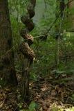 δέντρο που στρίβεται υπε& Στοκ φωτογραφία με δικαίωμα ελεύθερης χρήσης
