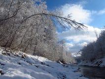 Δέντρο που υποκύπτουν κάτω Στοκ εικόνες με δικαίωμα ελεύθερης χρήσης