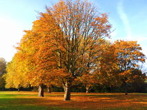 Δέντρο που χάνει τα φύλλα του Στοκ φωτογραφία με δικαίωμα ελεύθερης χρήσης