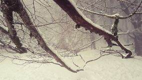 Δέντρο που χαϊδεύει το χιόνι Στοκ φωτογραφία με δικαίωμα ελεύθερης χρήσης