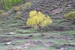 Δέντρο που χορεύει μόνο στοκ φωτογραφίες