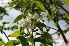 Δέντρο, πράσινο, φύση, φύλλα, φύλλο, κλάδος, φυτό, άνοιξη, καλοκαίρι, ουρανός, γεωργία, δάσος, ήλιος, λουλούδι, φθινόπωρο, νεολαί Στοκ εικόνες με δικαίωμα ελεύθερης χρήσης