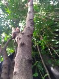Δέντρο πράσινο στοκ εικόνες