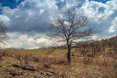 Δέντρο πριν από τη θύελλα στο βουνό Plana Στοκ Φωτογραφία