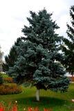 Δέντρο Προαύλιο του μοναστηριού Zamfira Στοκ εικόνες με δικαίωμα ελεύθερης χρήσης