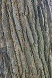 δέντρο προτύπων γραμμών φλο&io Στοκ φωτογραφίες με δικαίωμα ελεύθερης χρήσης