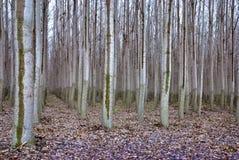 δέντρο προτύπων του αγροτικού Όρεγκον Στοκ Εικόνες