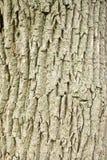 δέντρο προτύπων φλοιών Στοκ φωτογραφία με δικαίωμα ελεύθερης χρήσης