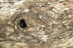 δέντρο προτύπων φλοιών Στοκ εικόνες με δικαίωμα ελεύθερης χρήσης