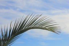δέντρο προτύπων φοινικών φύλλων Στοκ εικόνες με δικαίωμα ελεύθερης χρήσης