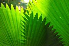 δέντρο προτύπων φοινικών φύλλων στοκ φωτογραφία με δικαίωμα ελεύθερης χρήσης