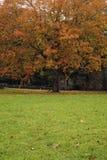 δέντρο πρωτοπόρων oconaluftee σφενδά& Στοκ Εικόνες