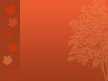 δέντρο πτώσης ανασκόπησης Στοκ Εικόνα