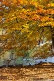 Δέντρο πτώσης στη λίμνη πόλεων Στοκ Εικόνες