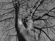 δέντρο πτώσης Στοκ Φωτογραφίες