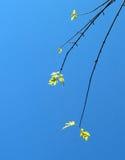 δέντρο πτώσης 6 λεπτομέρει&alph Στοκ Εικόνες