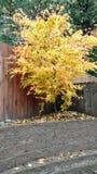 Δέντρο πτώσης Στοκ φωτογραφίες με δικαίωμα ελεύθερης χρήσης