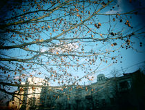 Δέντρο πόλεων Στοκ εικόνες με δικαίωμα ελεύθερης χρήσης