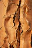 δέντρο ρίγου φλοιών Στοκ εικόνα με δικαίωμα ελεύθερης χρήσης