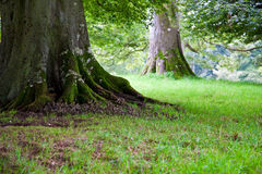 δέντρο ριζών Στοκ εικόνα με δικαίωμα ελεύθερης χρήσης