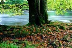 δέντρο ριζών Στοκ Φωτογραφία