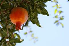 Δέντρο ροδιών εβραϊκό νέο υπόβαθρο διακοπών έτους Στοκ εικόνες με δικαίωμα ελεύθερης χρήσης