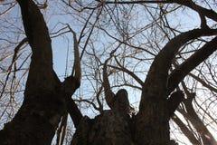 Δέντρο ροδιών στοκ εικόνα με δικαίωμα ελεύθερης χρήσης