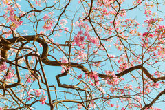 Δέντρο σαλπίγγων Στοκ φωτογραφία με δικαίωμα ελεύθερης χρήσης