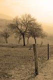 δέντρο σεπιών Στοκ Εικόνες