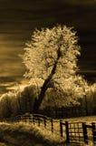 δέντρο σεπιών Στοκ εικόνα με δικαίωμα ελεύθερης χρήσης
