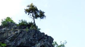 Δέντρο σε έναν βράχο 3 Στοκ εικόνα με δικαίωμα ελεύθερης χρήσης