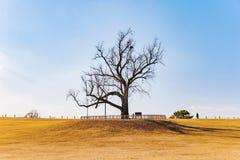 Δέντρο σε έναν κίτρινο τομέα χλόης στο ολυμπιακό πάρκο Σεούλ στοκ φωτογραφία με δικαίωμα ελεύθερης χρήσης