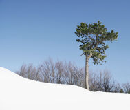 Δέντρο σε έναν λόφο χιονιού Στοκ Εικόνα