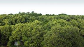 Δέντρο σε έναν τομέα Στοκ Φωτογραφίες
