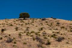 Δέντρο σε έναν λόφο στοκ εικόνα