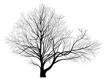 Δέντρο σε ένα άσπρο υπόβαθρο Στοκ εικόνες με δικαίωμα ελεύθερης χρήσης