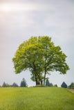 Δέντρο σε ένα λιβάδι Στοκ εικόνα με δικαίωμα ελεύθερης χρήσης