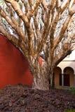 Δέντρο σε ένα σπίτι Στοκ φωτογραφία με δικαίωμα ελεύθερης χρήσης