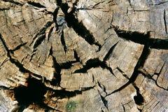 Δέντρο σε ένα τμήμα Στοκ φωτογραφία με δικαίωμα ελεύθερης χρήσης