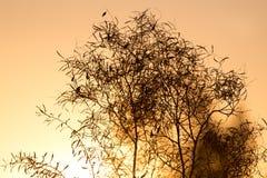 Δέντρο σε ένα υπόβαθρο της όμορφης ανατολής Στοκ εικόνες με δικαίωμα ελεύθερης χρήσης
